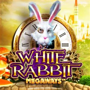 Bgt white rabbit